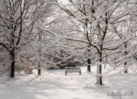 Trees and bench with snow