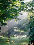 arboretum fog