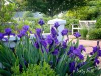 arboretum iris