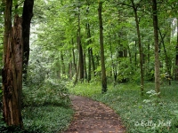 arboretum woods