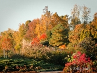 autumn at arboretum