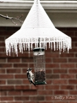 Downy woodpecker at nut feeder with icicle fringe