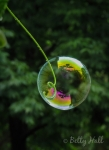 Backyard bubble and tendril