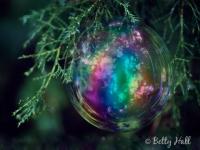 Bubble in cedar