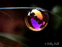 Bubble on grass