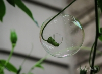 Bubble surrounding tendril