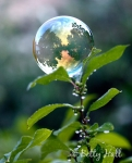 Gazing bubble