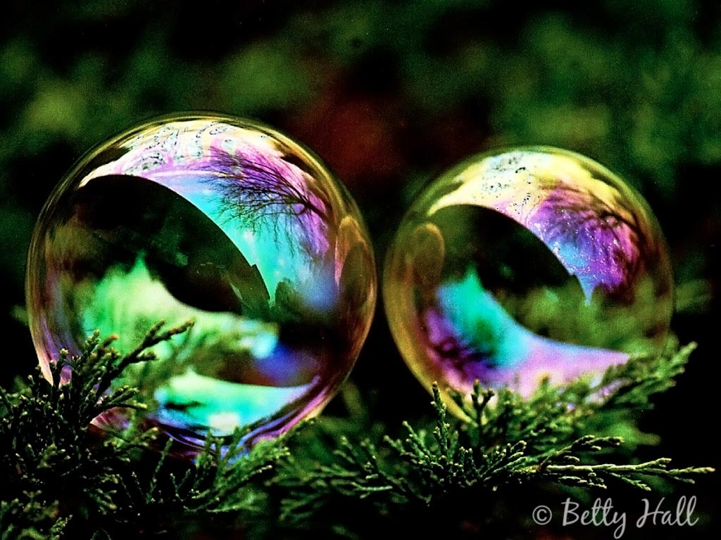Ipad Wallpaper Little Plant In A Bubble: Betty Hall Photography