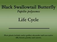 Black Swallowtail butterfly title