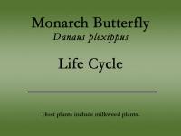 Monarch butterfly title