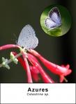 Azures
