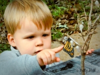 Young boy touching Monarch butterfly