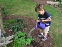 Young boy using garden sprinkler