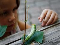 Young girl looking at Cecropia moth caterpillar