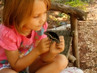Young girl observing butterfly