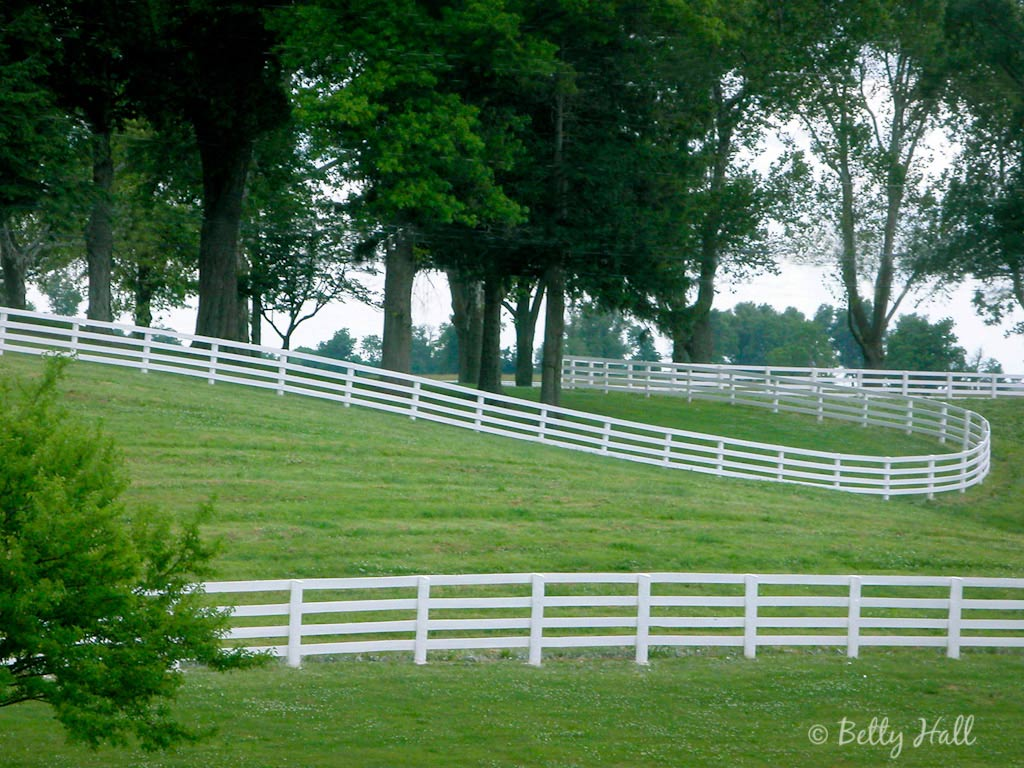 Kentucky - Betty Hall Photography