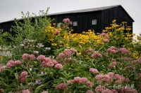 Monarch Waystation at Shaker Village