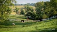 Shaker Village pastoral scene