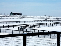 blue-grass-horse-farm-winter