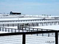 blue-grass-horse-farm-winter