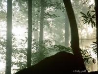 natural-bridge-foggy-morn