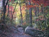 natural-brige-state-park-october