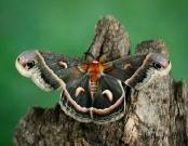 Moth life cycles
