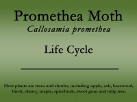 promethea-moth-title.jpg
