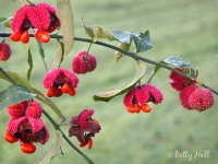 hearts-a-bursting-with-love-seedpods