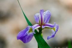 Native Plants - Spring