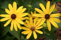 Native Plants - Summer