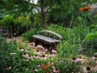 Cedar bench near rain garden