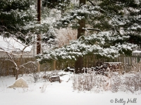 backyard-and-snow