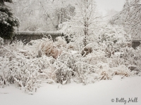 winter-garden-and-snow