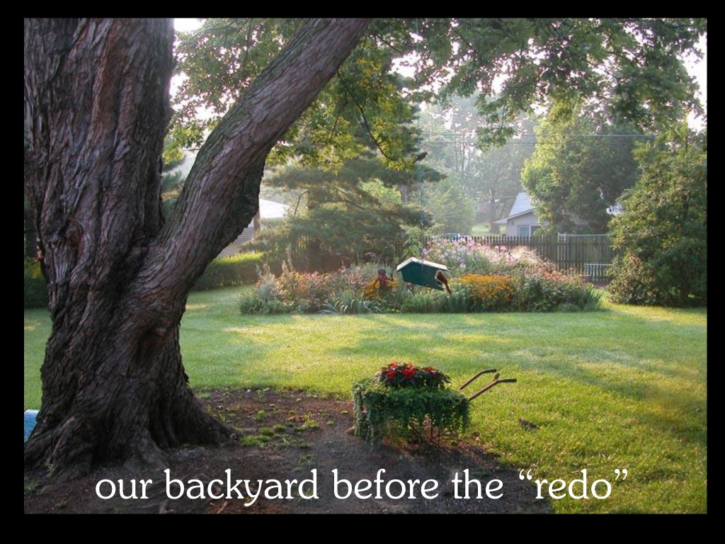 about our backyard betty hall photography