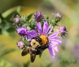 Backyard Pollinators