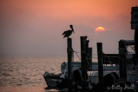 Pelican at sunrise