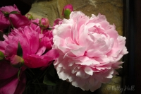 Two peonies