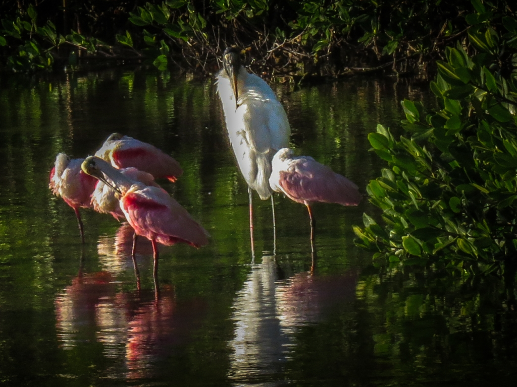 Wood Stork and Roseate Spoonbills