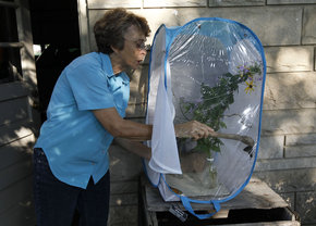 Betty Hall and buttefly cage