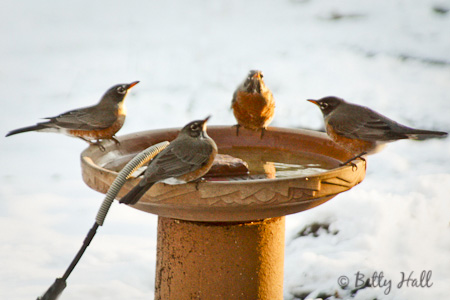 winter bird bath