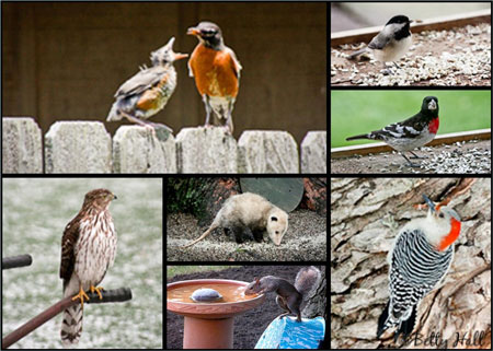Some Kentucky backyard birds and mammals
