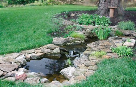 our Kentucky backyard