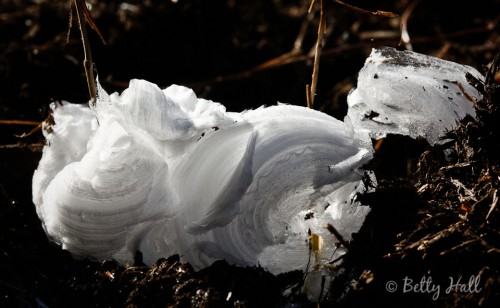 Frost flower 6 on cunila origanoides