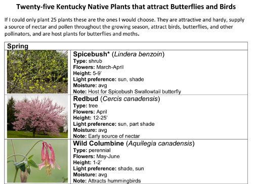 Sample of the handout on 25 favorite Kentucky native plants