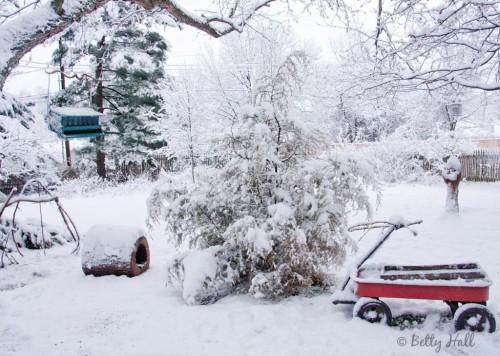 KY backyard and snow