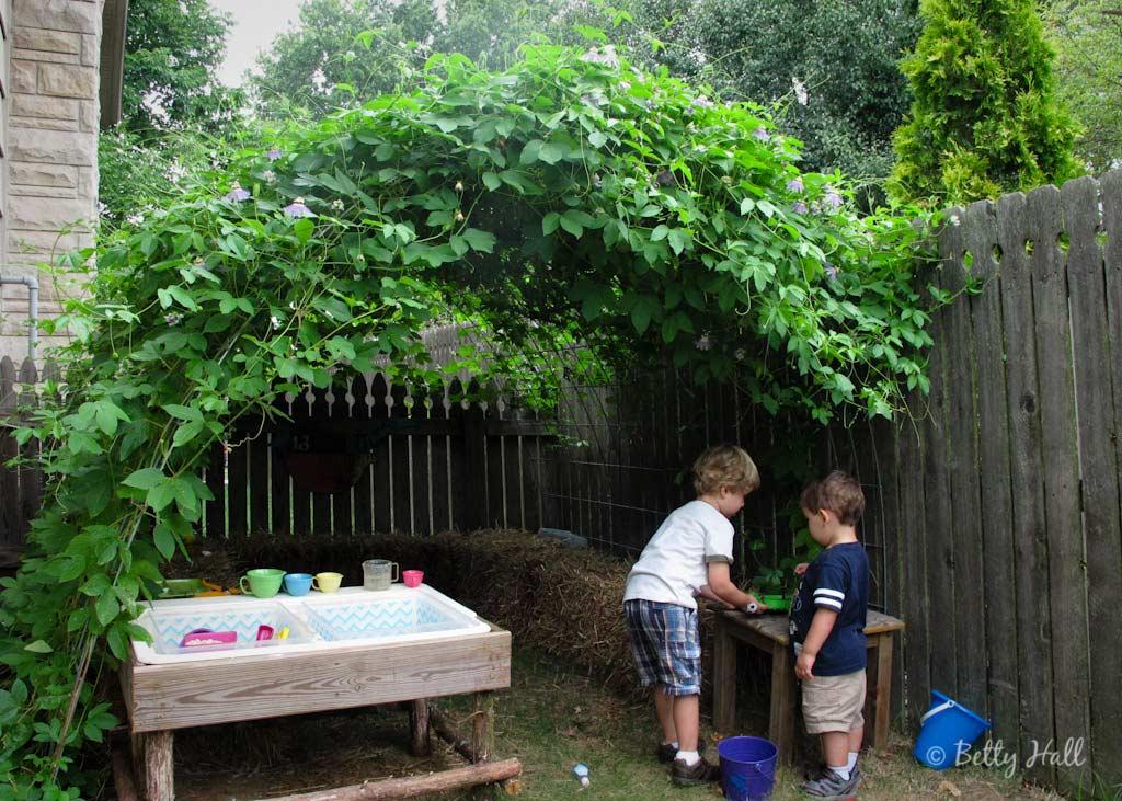 Passiflora incarnata vine hideout in August