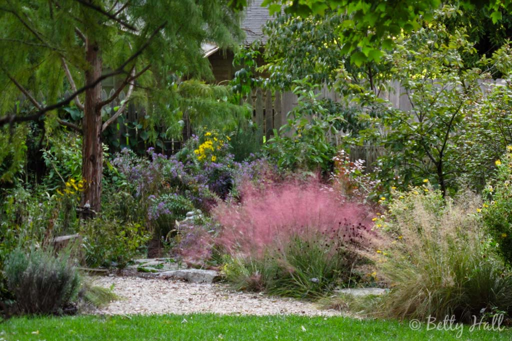 pink muhly grass, asters, and sunflowers in October