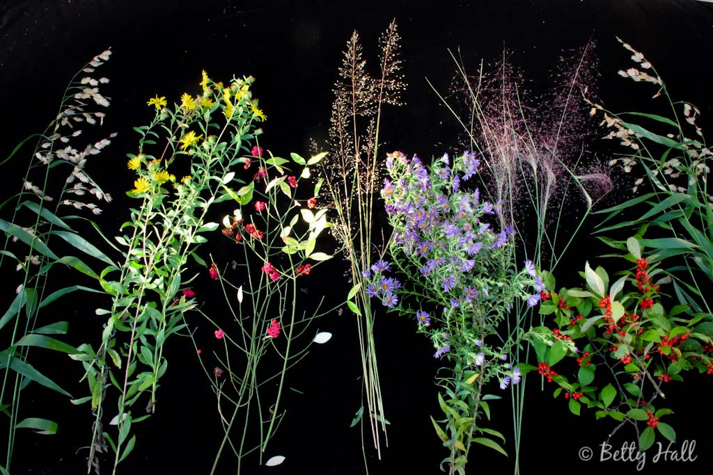 seven September blooms, berries, and grasses