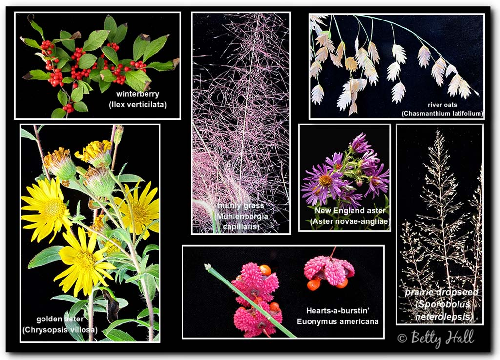 Collage of seven different September blooms, grasses, and berries